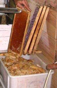 Extracting Beeswax Cappings