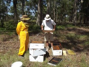 Inspecting Honey Bee Hives