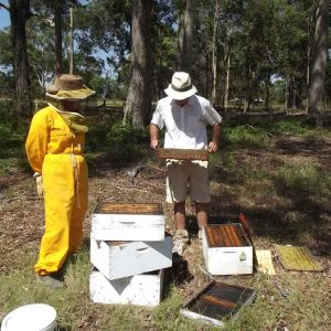Inspecting Honey Bee Hives