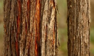 Stringybark Honey