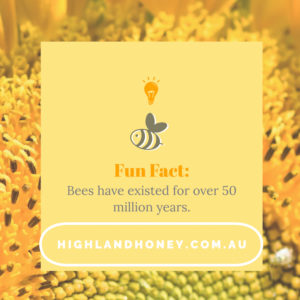 Bee Fun Fact