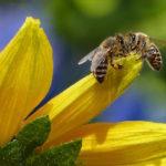Highland Honey Social Bees